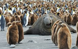 South Georgia and the South Sandwich Islands are home to more than 3 million penguins, along with fur seals, elephant seals and various species of whale.