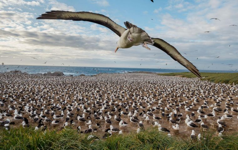 Last January it was announced that National Geographic February 2018 would document the Falkland Islands' diverse ecosystem by wildlife photographer Paul Nicklen.
