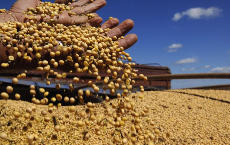 After a slow start, the rainy season has been beneficial for the soybeans since early November and as a result, Conabs soybean estimate could move higher. Pic: Cadu Gomes/CB/D.A Press