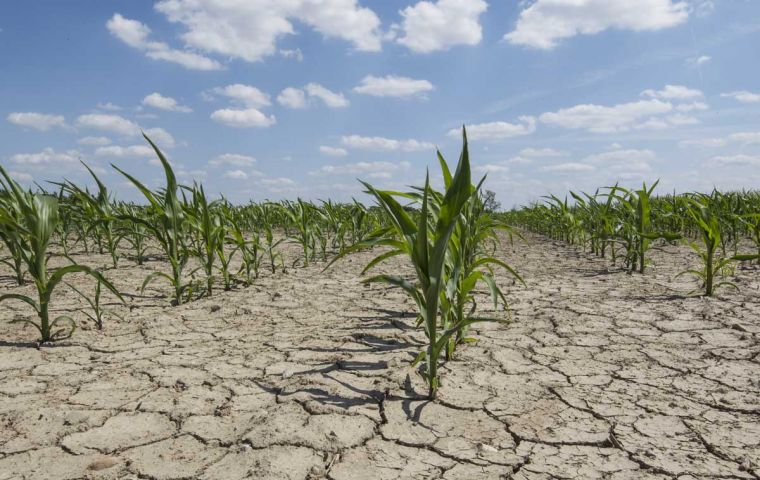 Lack of water has cut January projection by 5.5m tons in soybeans, which stands at 46.5m tons, and 4.9m tons of corn, which stands at 35 million tons