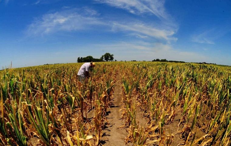 The drought has resulted in an expected decline in harvest value of US$3.1 billion, or 0.5% of GDP when compared to last year