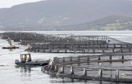 Atlantic salmon sea net-pen farming has been targeted after some 263,000 invasive Atlantic salmon escaped last year when a marine net pen collapsed.