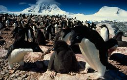 The group of nine rocky islands, off the northern tip nearest South America, in the northwest Weddell Sea, houses one of Adelie penguin largest colonies in the world