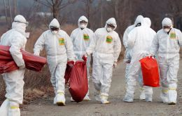 The Korean outbreak was the first farm affected in Korea since February 2017 and an extensive vaccination campaign has been launched