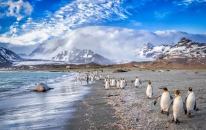 Unlike the Falkland Islands Tourist Board, it is a members' organization, open to any individuals or organization involved in the tourism industry in the Islands.