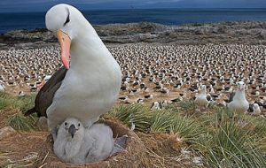 They perform a variety of environmental research and conservation-based work annually, including monitoring of the globally important seabird colonies