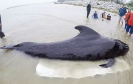 The bags, weighing about 8kg, had made it impossible for the whale to eat food, a marine expert said.