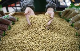 The latest estimate for the 2017-2018 Brazilian soybean crop is up to 119 million tons, compared to last year's harvest of 114 million tons.