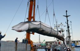Australia's Department of the Environment and Energy said it would seek to block any attempt by Japan to resume commercial whaling.