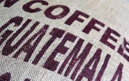 Better yields in Brazil, Vietnam, and Honduras have caused a drop in Guatemala coffee prices, from US$170-180 per 100 pounds of coffee to US$110