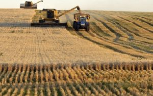 The Buenos Aires Grains Exchange has a preliminary wheat harvest estimate of 19/20 million tons, also above what it says is the current record of 17.75 million tons