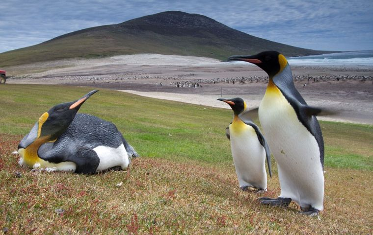 By leaving the EU, Falklands will lose access to a million Euros in potential environmental grants and another 5 million Euros from the Best program