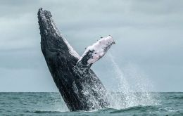 The non-binding agreement was backed by 40 countries, with 27 pro-whaling states voting against