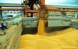 Imports from Brazil dropped to a 40% share of the bloc's roughly 35 million ton annual import market for the animal feed staple.