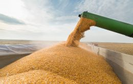 The Rosario Grains Exchange on Wednesday slashed its forecast for the season to 19 million tons, also citing poor weather in Argentina.