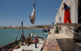 Bluefin tuna shipments were being smuggled into Spain through the French harbors after being caught in Italian and Maltese waters.