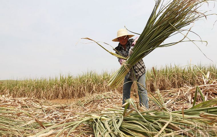 Sugar is one of China's major farm produces and concerns the economic interests of more than 40 million sugar farmers.