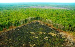 Satellite images through the end of July 2018 showed that 7,900sqkms of forest were cleared in the Amazon, equivalent to more than half the territory of Jamaica