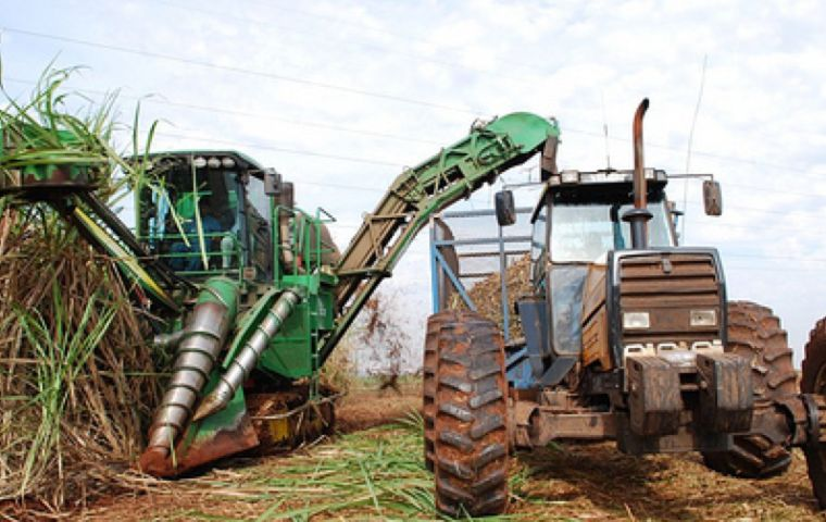 A shift to ethanol in the 2018-19 season slashed Brazil's sugar output by 9 million tons to a 12-year low
