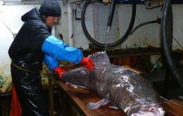 INIDEP assessment survey was used to establish hoki, blue whiting, Patagonian toothfish and  common hake 2019 TACs