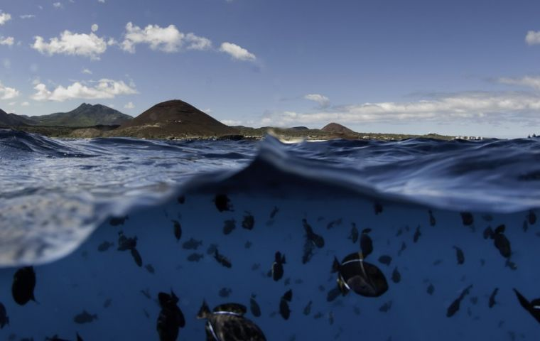 Ascension Island's: home to one of the largest and healthiest green turtle rookeries in the Atlantic and a million seabirds breed and forage on its shores