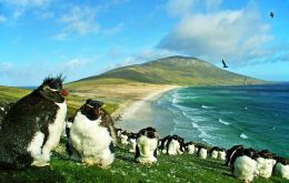 The piece is illustrated with a photo of Southern Rockhopper penguins on the cliffs of Saunders Island in the Falklands