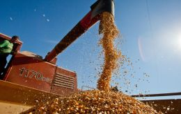 According to government data, by the third week of January Brazil's corn exports had totaled 2.80 million tons