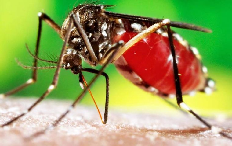 The viral disease is spread by infected mosquitoes and can cause an illness that leads to jaundice and bleeding
