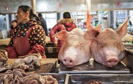 China, home to the world's largest hog herd, has reported 112 outbreaks of the highly contagious disease in 28 provinces and regions since August