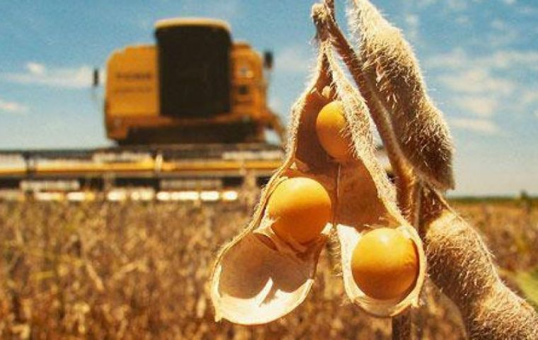 Average yields were running higher than 4.3 tons per hectare in the central Pampas farm belt, the crop report said.