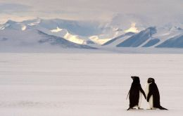 According to the State of Antarctic Penguins Report 2017, there is estimated to be 12 million penguins