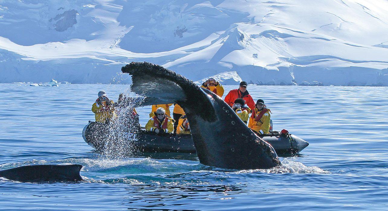 Antarctic Tour Operators introduce mandatory measures to prevent