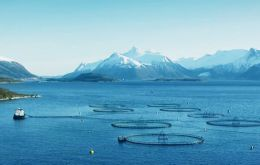 Farmed salmon are treated with medications to ward off disease and infestations, such as sea lice, but there are limits on how much is used