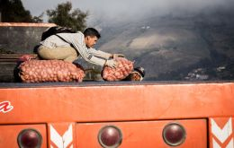 Farmers unload potato from a truck in the highlands of Mérida, Venezuela. Photo: Sebastián Astorga