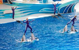 """We are asking SeaWorld to at least stop standing on dolphins' faces and using them as surf-boards in these ridiculous circus-style shows,"""