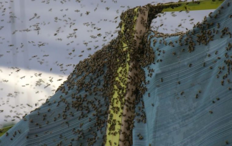 NBC news said local officials put out warnings amid concerns for people with bee allergies. No one was hurt in the crash, the media outlets reported.