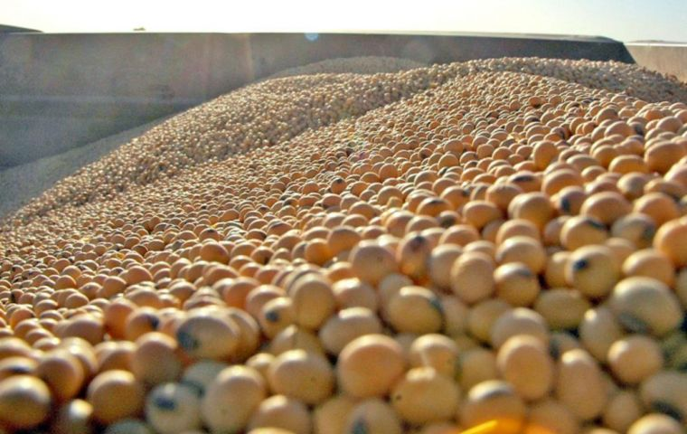 Higher soybean production in Argentina could lead to increased competition with Brazil, as China looks to South America for soybean purchases amid the ongoing US-China trade dispute.
