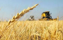Wheat in Argentina is planted in June and July and harvested in December and January. Some 39% of this season's wheat crop has been planted so far