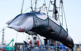 IWC members had agreed to an effective ban on whale hunting, but Japan has long argued it is possible to hunt whales in a sustainable way.