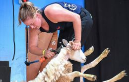 "More than 320 competitors from 34 countries battling to win titles in wool handling, machine shearing and ""blade"" shearing, a traditional method using scissors. (Pic AFP)"
