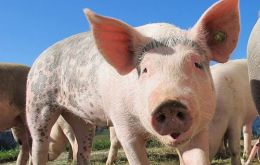 All pigs in Zhernov will be culled and a 3-kilometre quarantine zone will be established around the village, the agency said in a statement.
