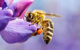 As some of the most integral pollinators in nature, bees contribute to the reproduction of various plants