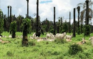 Ecologists have attacked a law promulgated by Morales that offers incentives to burn forest areas to transform them into pastureland