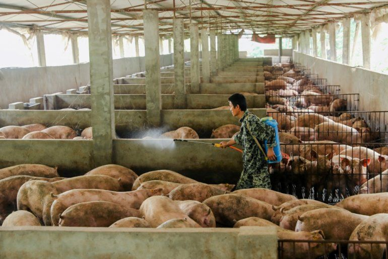 African Swine fever has reached Philippines confirmed by UK