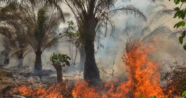 Malaysia and Indonesia clash over fires in the rain forest allegedly involving palm plantations
