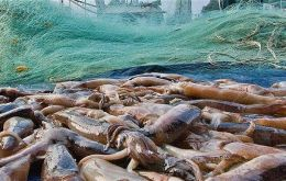 Calamari squid catches in 2019 reached 80.600 metric tons with an estimated value of  £190 million