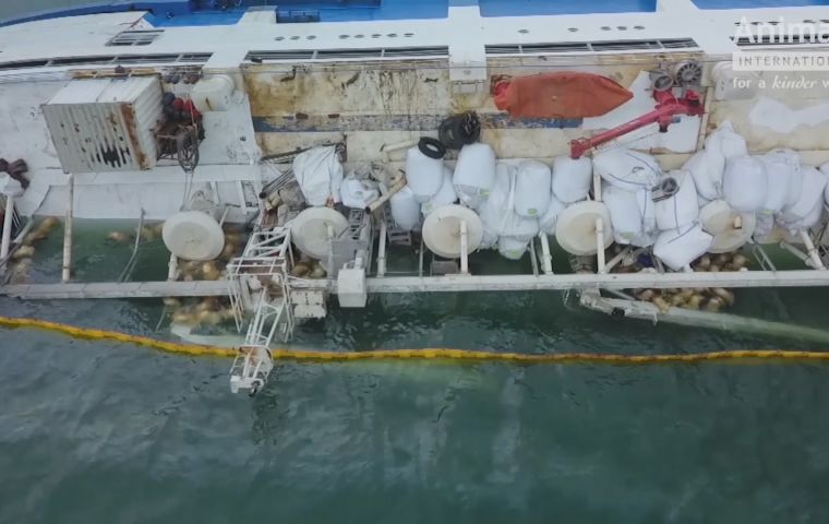 Drone footage released on the BBC showed the bodies of dozens of drowned animals floating next to the vessel.