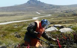 A team of very efficient Zimbabwean experts working in mine clearance in the Falkland Islands