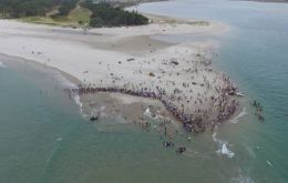 """Seven whales that stranded at Matarangi Spit are being looked after by as many as 1,000 people,"" the marine conservation group Project Jonah said in a statement."