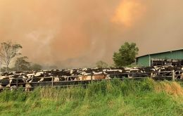 Even before the fires, Australia's milk production was set to fall to a 22-year low due to drought, according to country's chief commodity forecaster